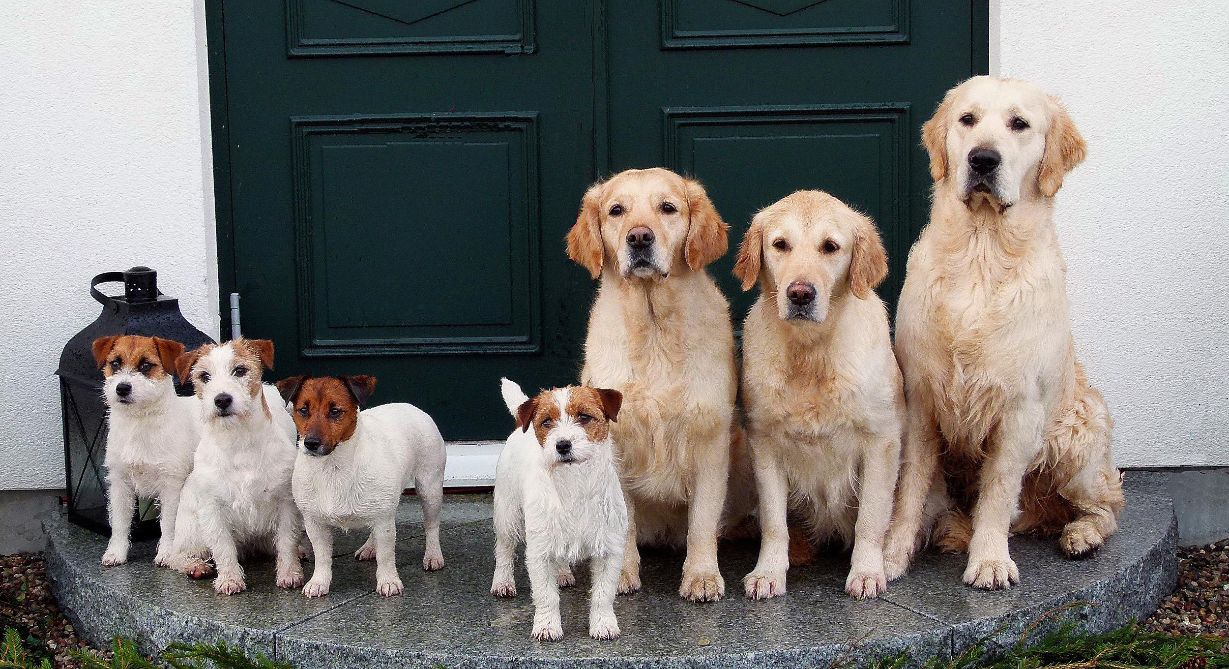Hundarna på trappan_redigerad-1